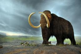 Description Woolly mammoth jpg 1049