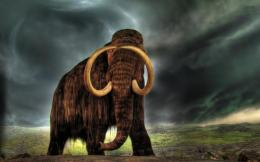 wooly mammoth full hd wallpaper downlaod wooly mammoth images free 1046