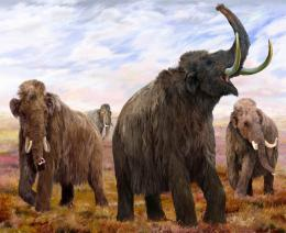 Woolly Mammoth Wallpapers 1125