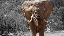 namibia wooly mammoth high resolution wallpaper download wooly mammoth 183