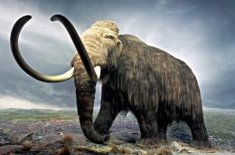Mammoth on tundra, replica, Royal British Musem, Victoria B C 1508
