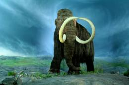 Woolly Mammoth Wallpapers 1330