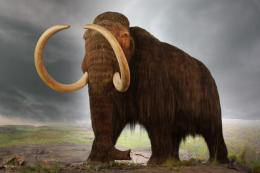 woolly mammoth by hafiz hassan on wednesday march 11th 2015 woolly 1892