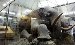 Related Pictures woolly mammoth wallpapers encyclopedia animals 921