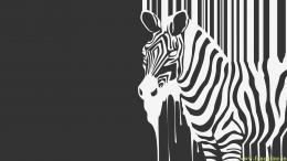 Black and White Zebra Splash Wallpaper for Widescreen