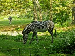 The best top desktop zebras wallpapers hd zebra wallpaper 20 jpg