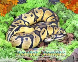 Moss Series WallpaperBall Python Pastel Jungle Morph 1501