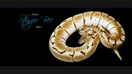 Ball Python Wallpapers 1356