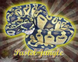 Burst Series WallpaperBall Python Pastel Jungle Morph 189