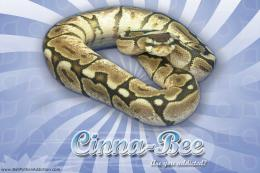 Vertigo Series WallpaperBall Python Cinna Bee Morph 346