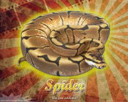 Burst Series WallpaperBall Python Spider Morph 1925