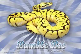 Vertigo Series WallpaperBall Python Bumble Bee Morph 777