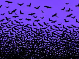 real bats flying in night, bats wallpaper, widescreen bat pictures, 600