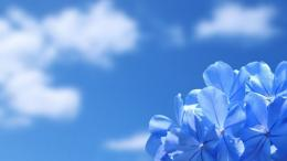 Blue Sky Desktop Wallpapers 133