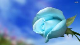 sky wallpapers rose wallpaper blue sky flower wallpaper 42835 jpg 2000