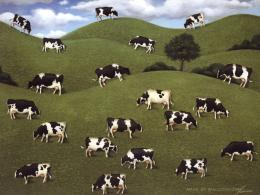 Lowell Herrero Cows Cows Cows Wallpapers 1024*768 NO 12 Wallpaper 1783