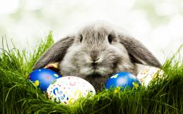 Easter Celebrations HD wallpapers 171