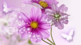 Celebration Of Cosmos HD wallpapers 382