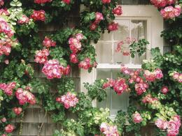 of Country Cottage Nantucket Massachusetts wallpaper and share it 1065