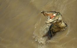 Alligator new HD Wallpapers 2012 732