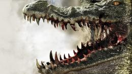 Alligator new HD Wallpapers 2012 1933