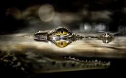 Crocodile HD Wallpapers 200