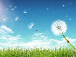 16806 desktop wallpapers dandelion 1260