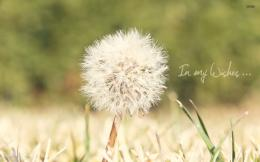 Dandelion wallpaper 1920x1200 1499