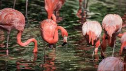 Flamingos Birds Wallpapers 663