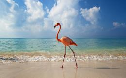 Flamingos Birds Wallpapers 1689