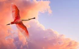 Download Nature Wallpaper wallpaper, \'Pink Bird\' 1469