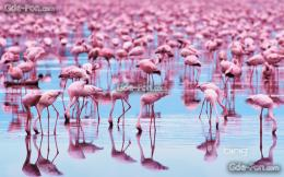 Download wallpaper animals, Birds, flamingo free desktop wallpaper in 1010