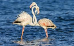 Flamingos Birds Wallpapers 1243