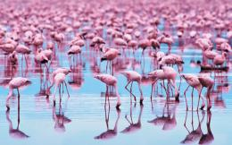 awesome collection of pink flamingos wallpapers desktop wallpapers 725