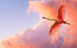 Flamingos Birds Wallpapers 1145
