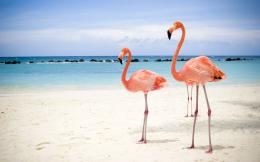 Flamingo Images 521
