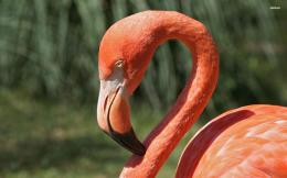 Flamingo Bird wallpaper 394