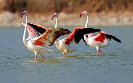 wallpaper lake in flamingo birds categories birds downloads 1174 added 1443