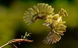 Encounter mantis flying green bird animals 1332