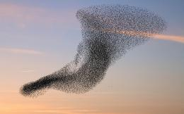 Wallpaper of a flock of flying birds | HD bird wallpapers 1539
