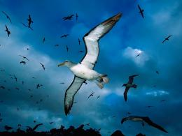 Flying Birds Apple Animals Blue Sky HD Wallpaper 1538