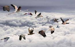 under the birds wallpapers category of free hd wallpapers flying bird 652