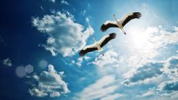 hd wallpaper birds flying 1920×1080 wallpaper 1366
