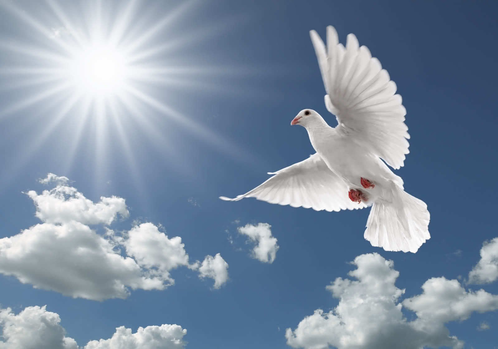 4 Pigeon Birds Free Download High Quality Hd Wallpapers Of Pigeon Birds 938 Flying Birds Hd Wallpapers