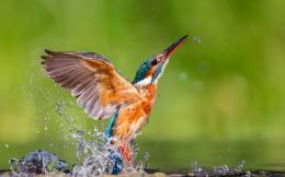bird trying to fly from water free download new hd wallpapers 1409