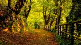 Windows 8 HD Desktop Wallpapers | Forests and Woodlands Wallpapers 1 1345