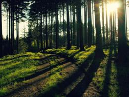 Abstract Forest path HD Wallpapers 1388