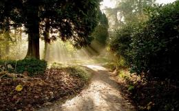 sun drenched forest path wallpaper tags forest leaves sun rays path 733
