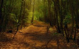 in forest walllpaper path in green forest nature landscape wallpaper 1700