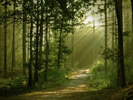 nature trees forest path sunlight wallpaper Forest Path HD Wallpapers 410